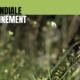 Article : World Environment Day pour sauver une biodiversité en crise