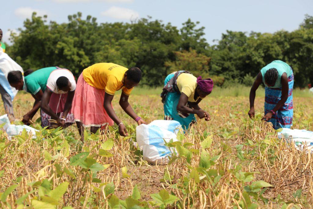 travaux champêtres pour Commerce équitable : au-delà des labels @etresensibleasonenvironnement